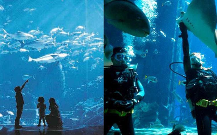 迪拜亚特兰蒂斯酒店的水世界